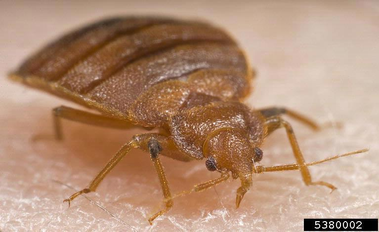 bed bug removal service