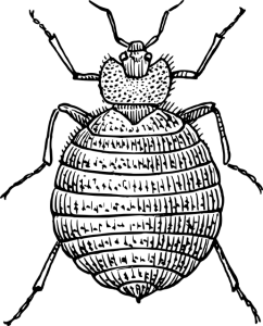 black and white sketch of a bed bug