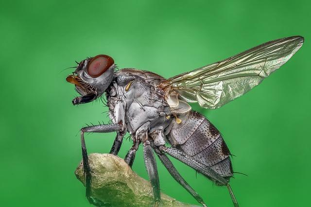 zoomed in picture of a cluster fly