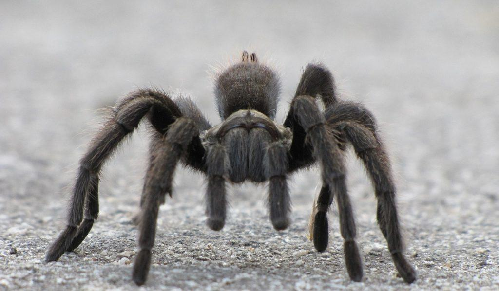 spider removal and pest control